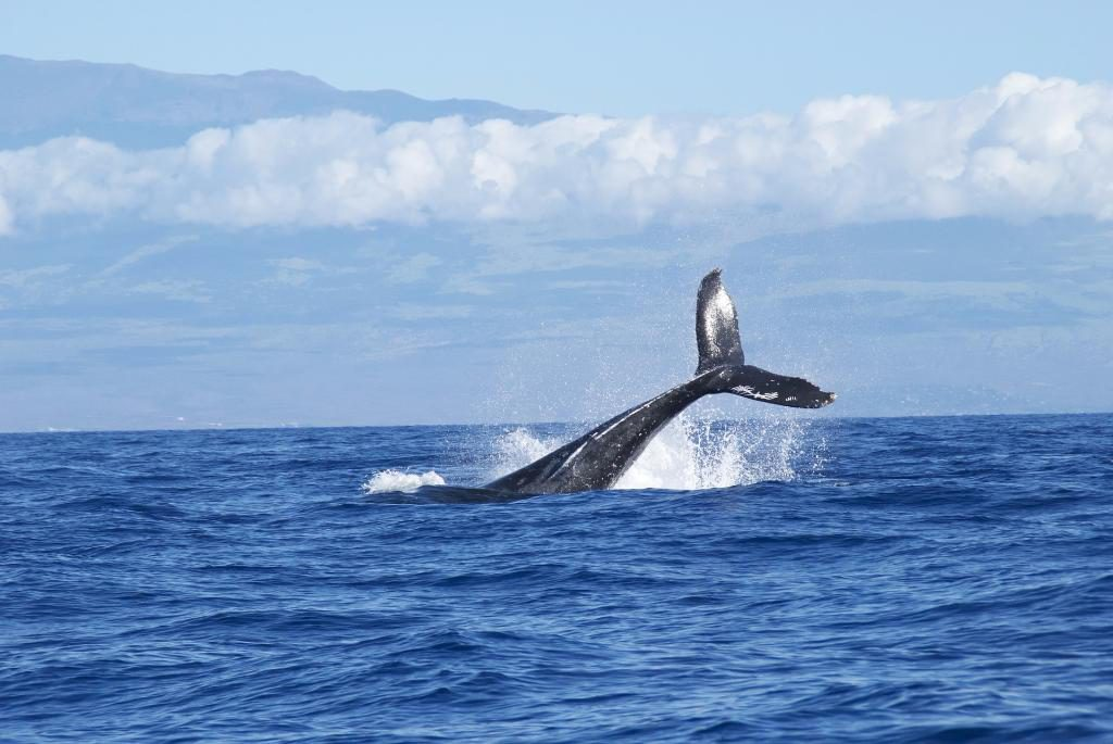 whales-1149978_1920
